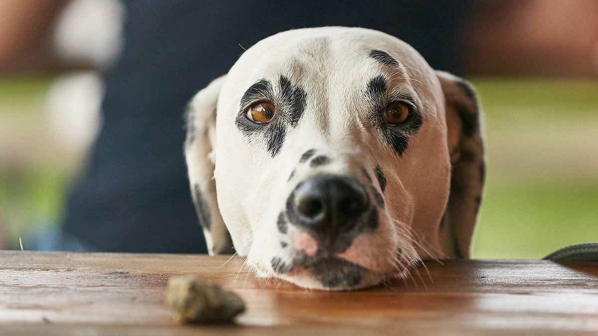 These Thanksgiving foods will make your pet sick