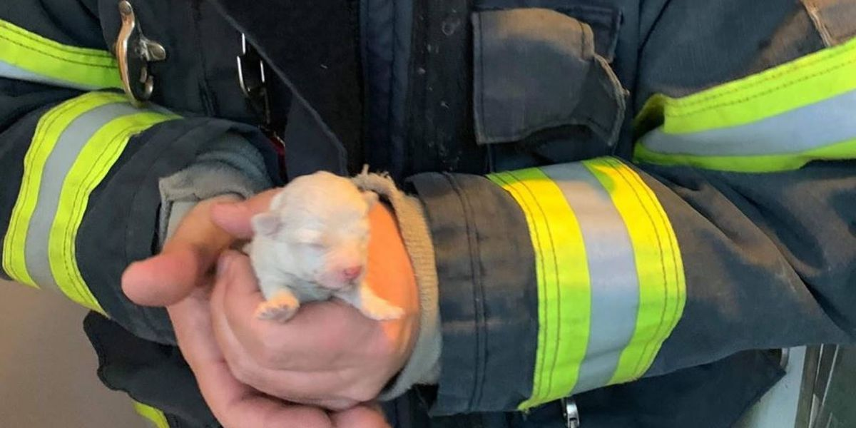 New York firefighters save week-old puppy that fell into heating vent