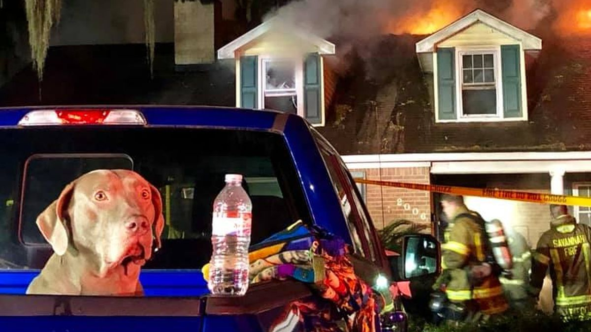 Dog saves family from house fire in Georgia