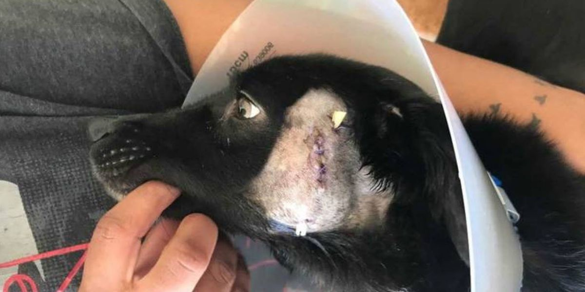 Texas man stabbed girlfriend's dog, broke its teeth with pliers, police say