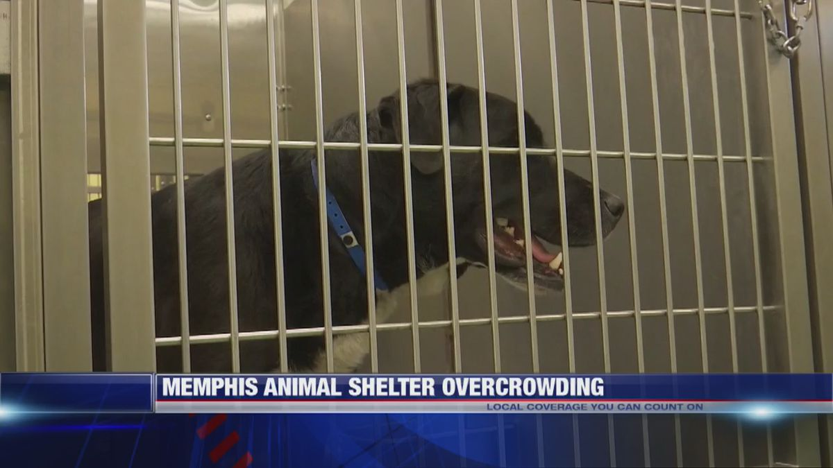 Adopt a new pet for only $10 if you vote in Memphis