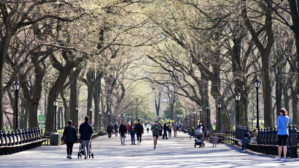 New York woman who called police on black man in Central Park gets dog back