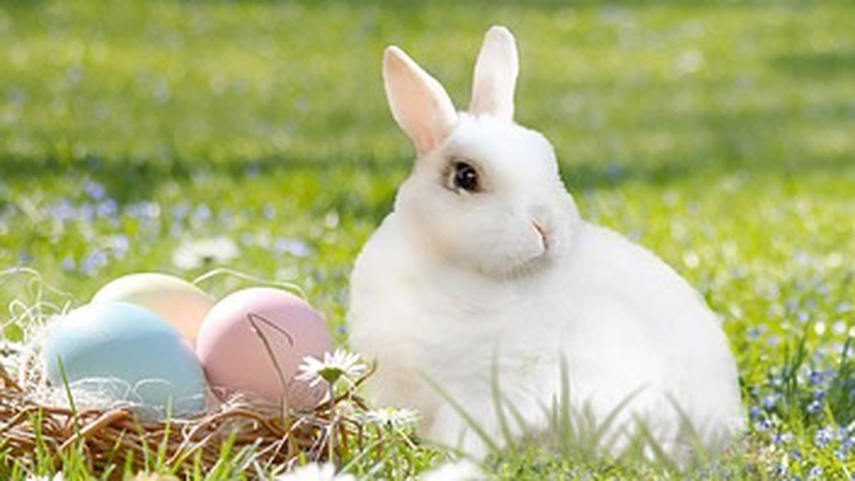 Collierville mayor declares the Easter Bunny an essential worker