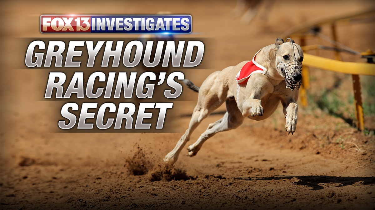 A Dying Breed: Greyhound racing's multi-million dollars secret
