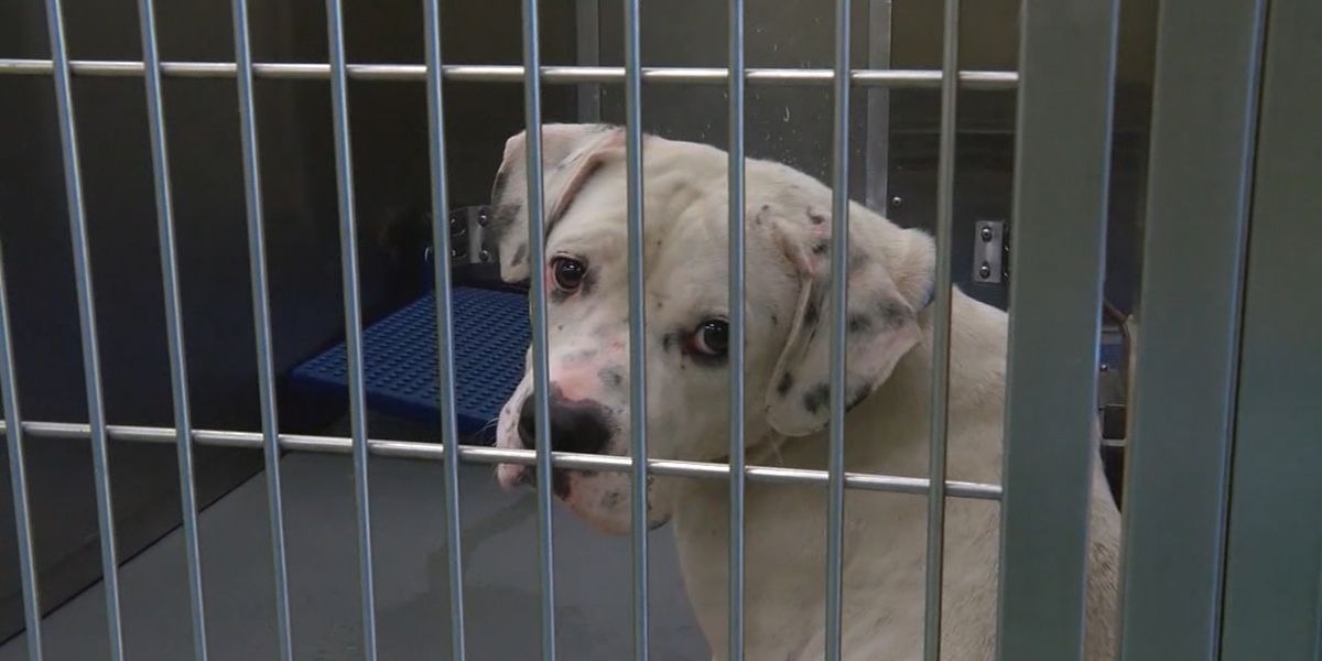 Memphis fire stations fostering dogs in need of homes